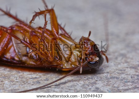 Close up of a death cockroach