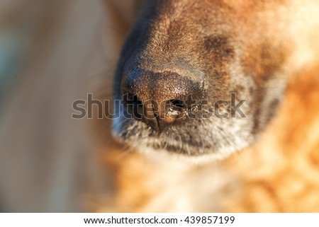 Close-up of a dog's nose - stock photo