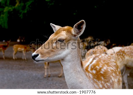 close-up of a fawn - stock photo