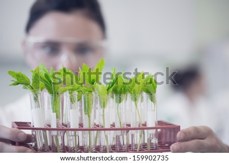 Close-up of a female scientist with young plants at the laboratory - stock photo
