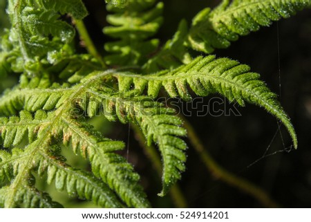 close up of a fern leaf on black background