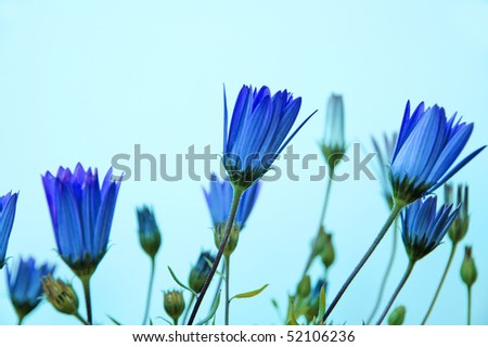 close up of a few blue wildflowers - stock photo