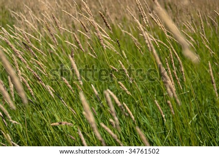 Close-up of a field of wild grass - stock photo