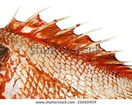 Fish fin close up