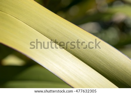 Close up of a flax leaf