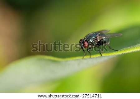 Close-up of a fly with red eyes on a green leaf. - stock photo
