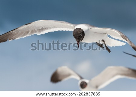 close up of a flying seagull over a blue sky - stock photo