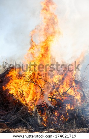 Close up of a forest fire burning bushes - stock photo