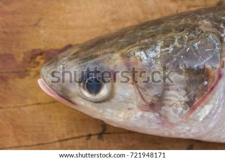 Close up of  a fresh fish on wood background