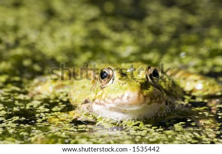 Close-up of a frog - stock photo