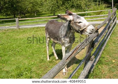Close-up of a funny donkey on the farm - stock photo