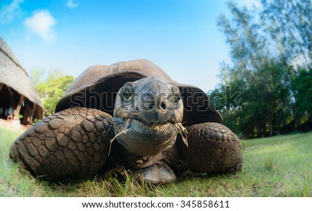 Close up of a giant tortoise taken on eye level with a wide angle lens - stock photo