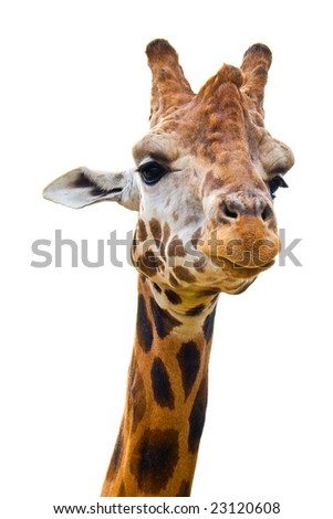 Close-up of a giraffe's face, isolated on white