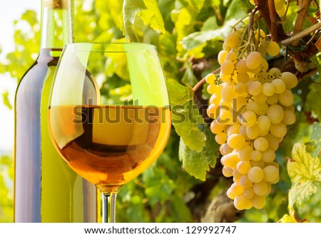 Close-up of a glass and bottle of white wine with grapes growing on the vineyard on background