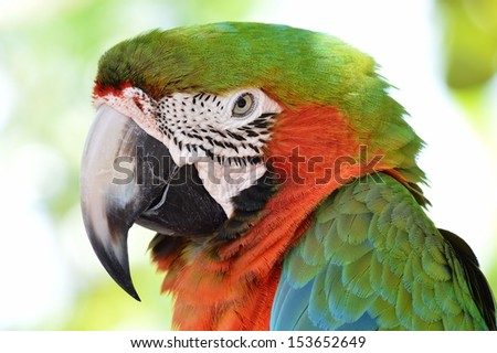Close up of a green and orange macaw's head. - stock photo