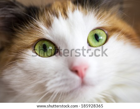 close up of a green cat eye - stock photo