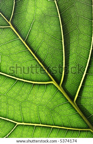 Close-up of a green leaf - stock photo