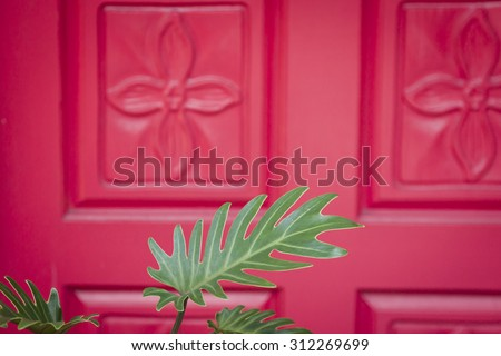 Close up of a green Philodendron plant in front of a red front door with flower carvings at the entrance to an upscale home. - stock photo
