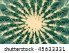 Close up of a green prickly cactus - stock photo