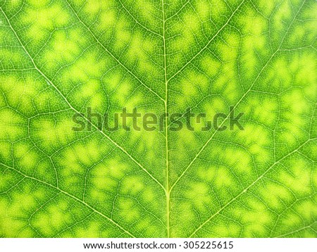 Close-up of a green tree leaf nature - stock photo