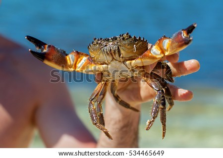 Close-up of a hand holding a big crab