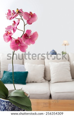 Close up of a home living room with a white sofa and a bright pink natural orchid flower against a white wall space, interior. Elegant and comfortable, beautiful and tranquil home view, indoors. - stock photo