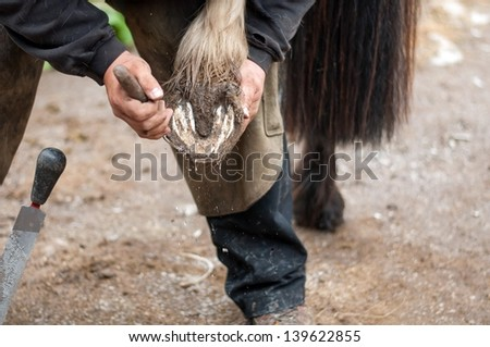 Close up of a hoof being trimmed by the farrier - stock photo
