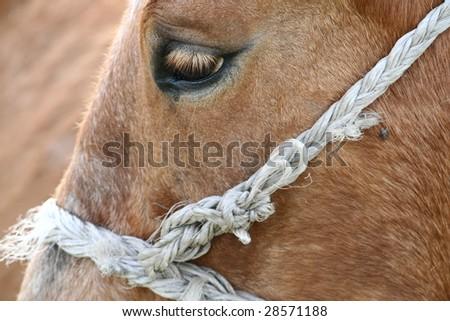 Close up of a horse'e eye - stock photo