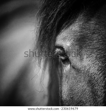 Close-up of a horse head - stock photo