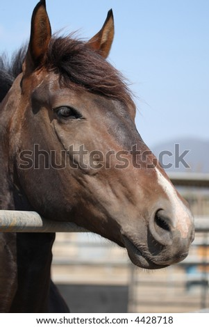 Close-up of a horse in a stable - stock photo