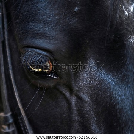 close up of a horse's eye - stock photo