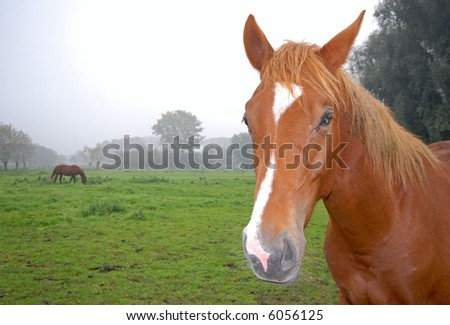 Close up of a horse with nature scene and another horse in the background - stock photo
