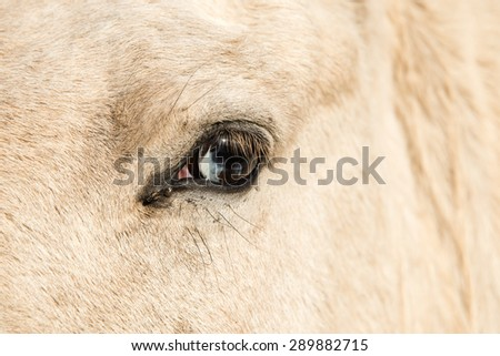 Close up of a horse with wall eye - stock photo