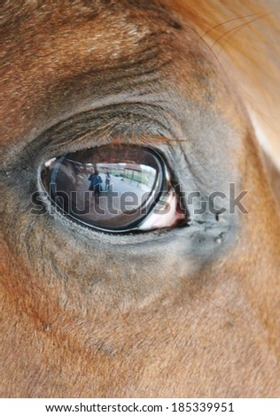 close up of a horses head eye with reflection of me, fence and the yard on eye - stock photo