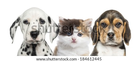 Close-up of a kitten between two puppies looking at the camera - stock photo