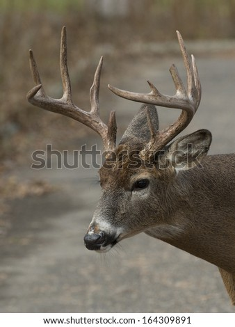 Close up of a large deer