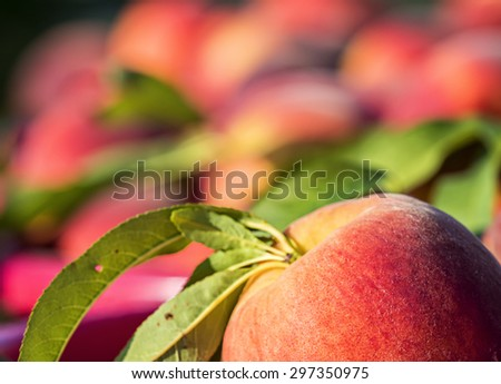 Close-up of a large pile of peaches at farm market. - stock photo