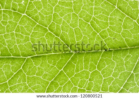 Close Up of a Leaf - stock photo