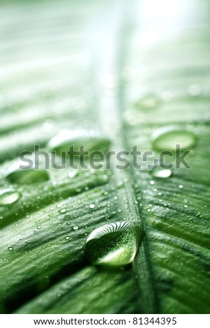 Close-up of a leaf and water drops on it - stock photo
