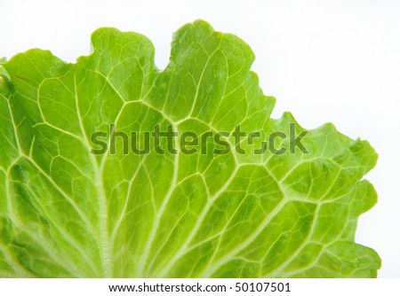 close up of a lettuce leaf - stock photo