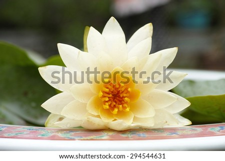 close up of a lotus flower in full bloom - stock photo