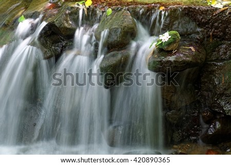 Close-up of a lovely stream and flowers fallen on a mossy rock by the cascading water (blurred background effect) ~ Beautiful river scenery of Taiwan in springtime ( close-up version) - stock photo