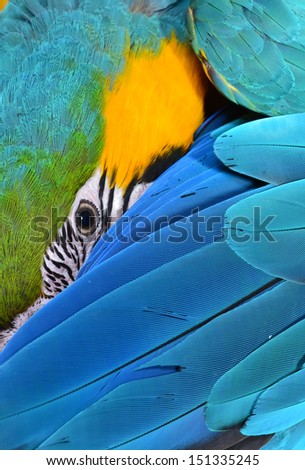 Close up of a Macaw - stock photo