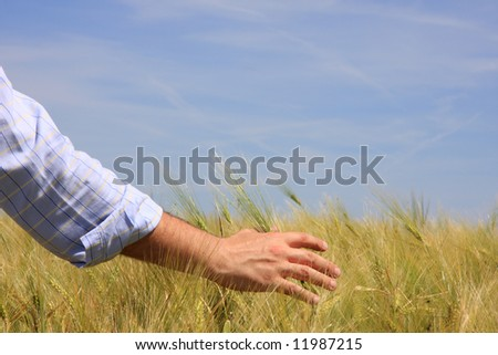 Close-up of a male hand touching wheat - stock photo