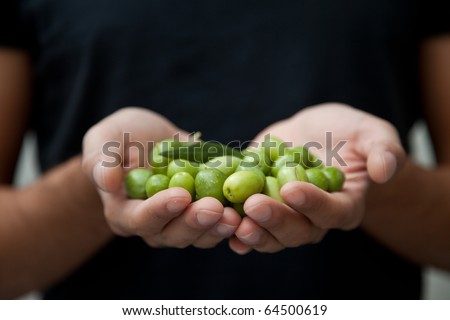 Close up of a man's hands holding a handful of olives - stock photo
