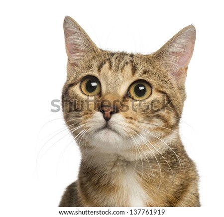 Close up of a Mixed-breed cat, 9 months old, isolated on white - stock photo