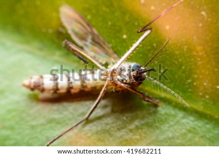 Close-up of a mosquito - stock photo