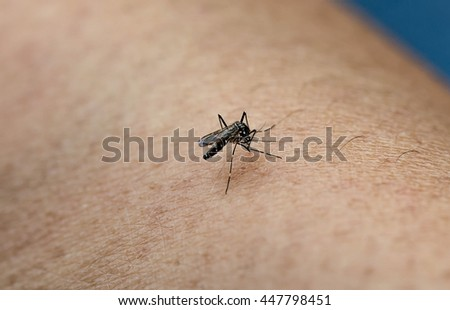 Close-up of a mosquito sucking blood on human skin. - stock photo