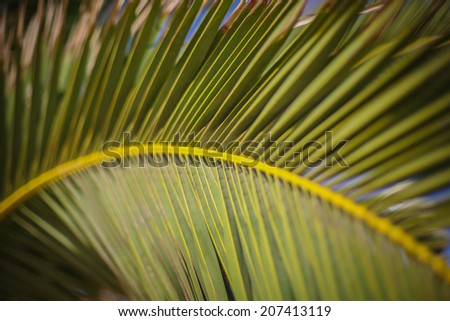 Close up of a palm leaf forming an arc in the tropical sun of Madeira - stock photo