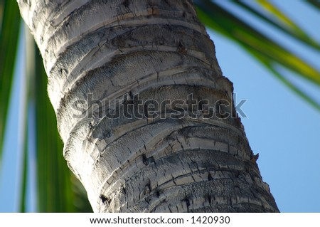 Close-up of a palm tree trunk